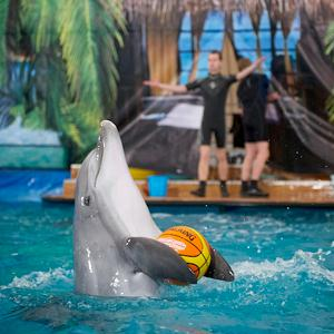 Дельфинарии, океанариумы Дуляпино