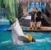 Дельфинарии, океанариумы в Дуляпино
